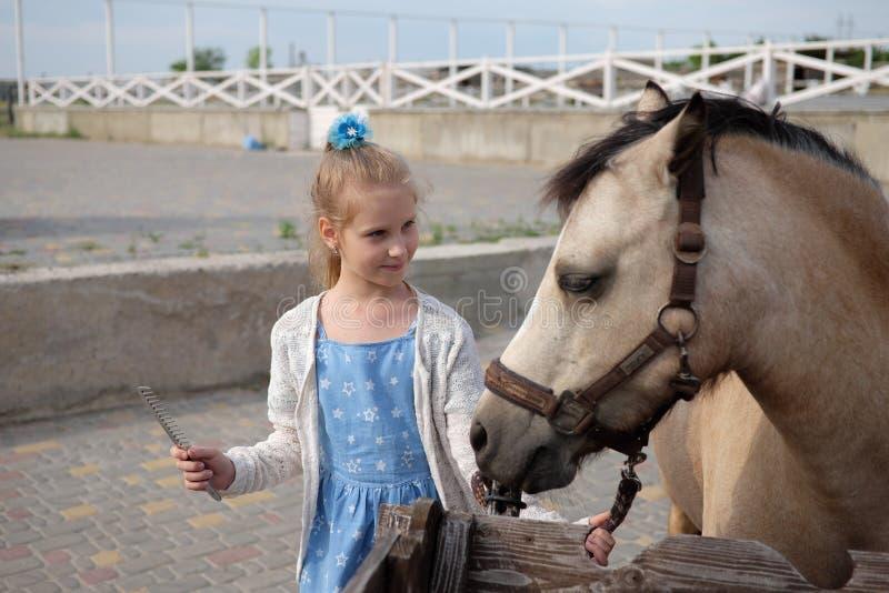 La bambina pulisce e pettina il suo cavallino e lo sella immagini stock