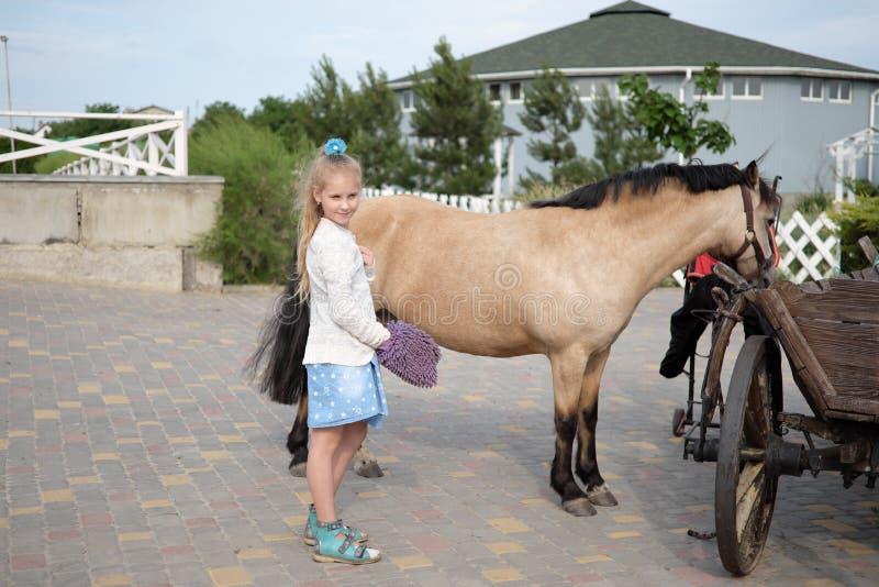 La bambina pulisce e pettina il suo cavallino e lo sella fotografia stock