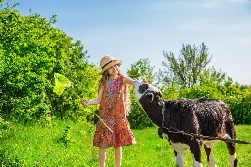 La bambina sta segnando un vitello in un campo immagine stock