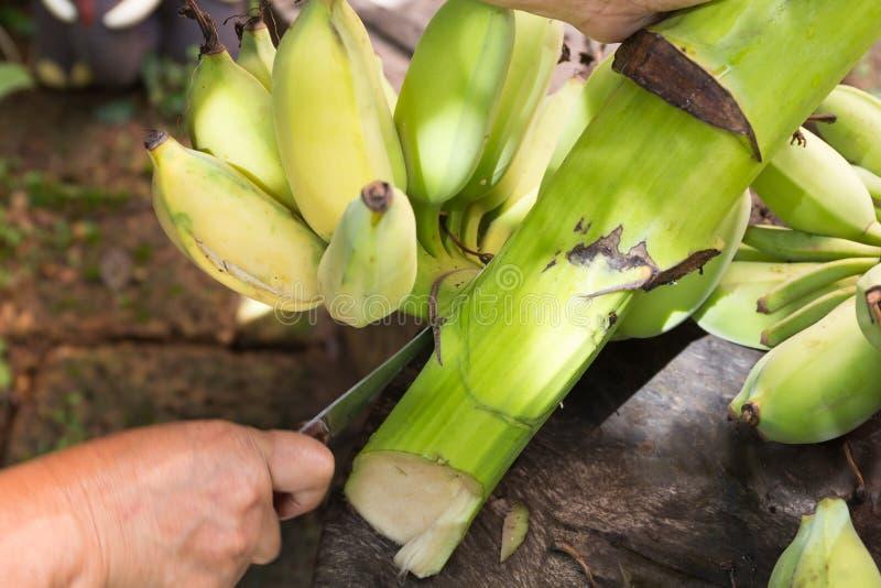 La banane crue a coupé avec le couteau à disposition sur la table en bois image stock