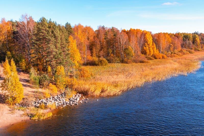 La Banca del fiume con le pietre sull'orlo di un giorno soleggiato di autunno fotografia stock libera da diritti