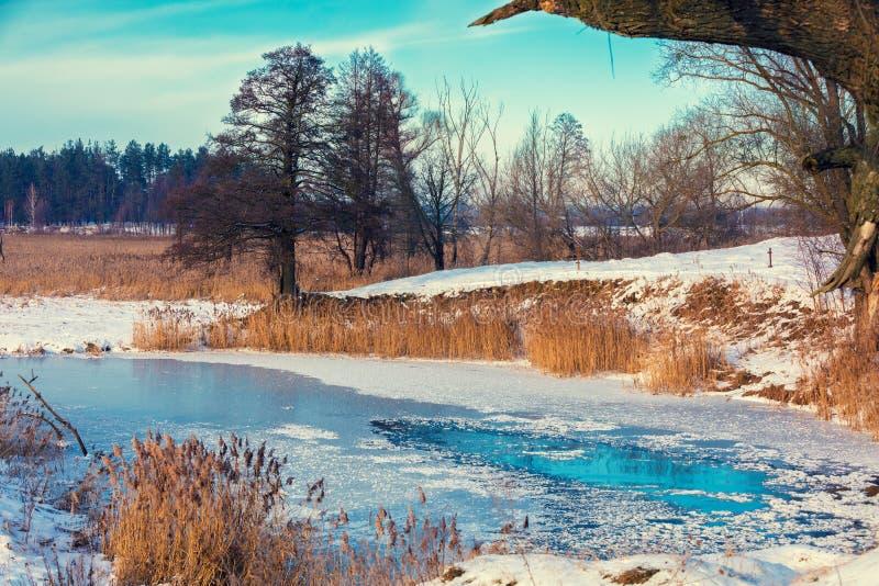 La banca del fiume congelato con le canne fotografia stock libera da diritti