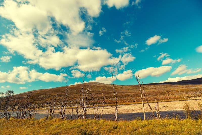 La Banca del fiume della montagna con la betulla nana fotografia stock libera da diritti