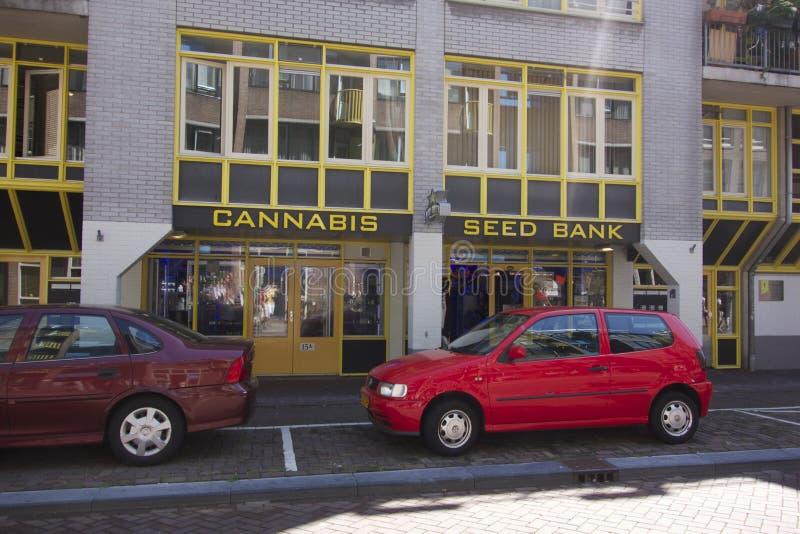 La Banca del seme della cannabis a Amsterdam immagine stock