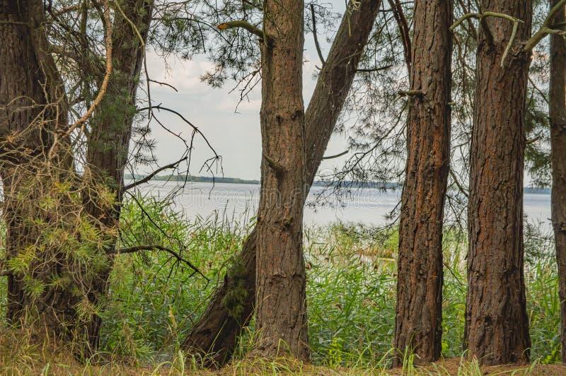 La banca della foresta del fiume è un paesaggio naturale immagine stock
