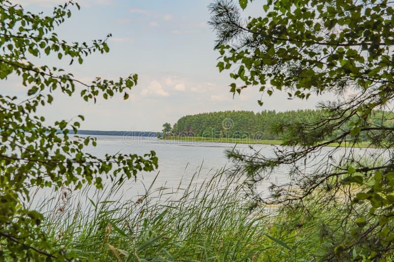 La banca della foresta del fiume è un paesaggio naturale fotografia stock libera da diritti