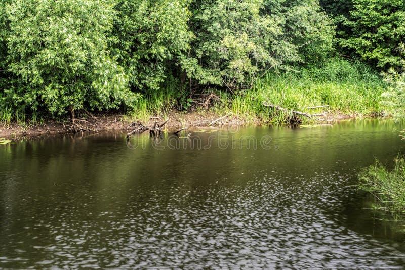 La Banca di piccolo fiume è stata invasa con i cespugli e gli alberi, il giorno ventoso nuvoloso dell'estate, fondo del paesaggio fotografia stock