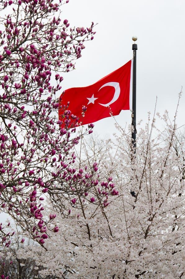 La bandierina turca in albero sboccia in primavera - Turchia fotografia stock libera da diritti