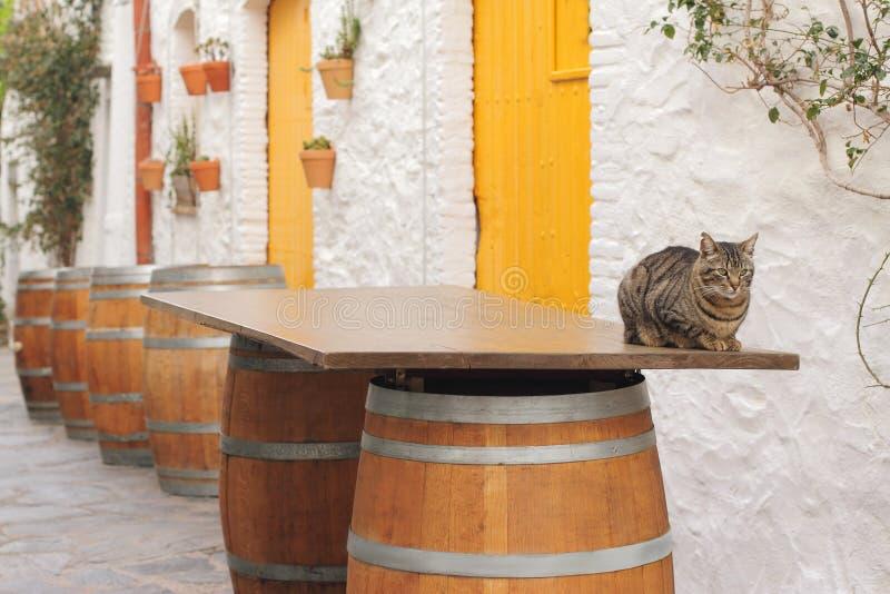 La barre espagnole dehors dans le temps de sièste, chat se repose sur l'étiquette de baril image stock