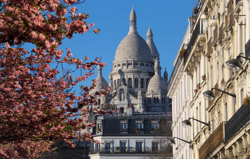 La basílica famosa Sacre Coeur y árbol en el primero plano, París, Francia de la flor de cerezo foto de archivo