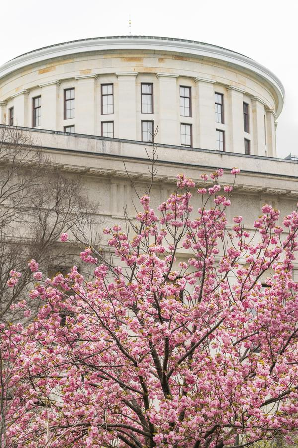 La base de Cherry Blossoms Blooming Downtown Urban del Statehouse de Ohio de Columbus imagenes de archivo