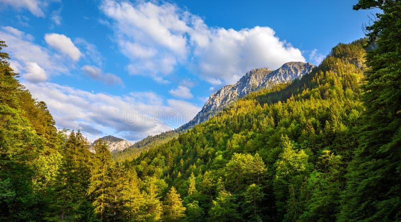 La Baviera, Germania Sera in montagne bavaresi delle alpi con gli alberi verdi immagine stock libera da diritti