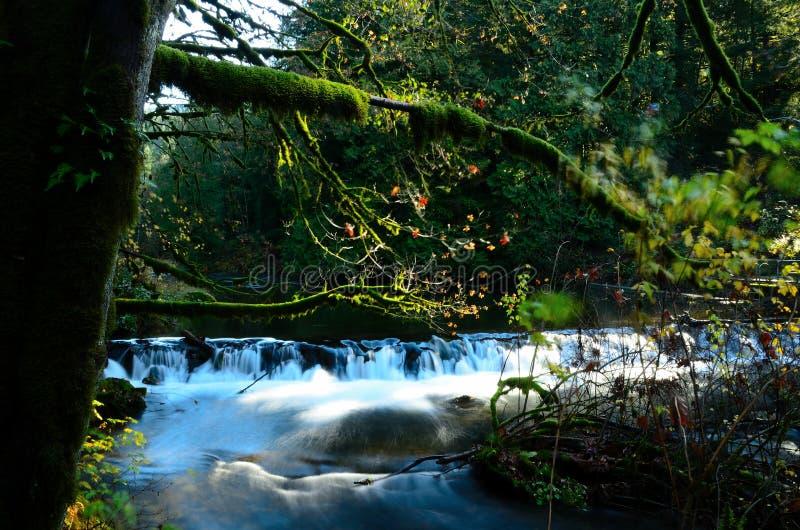 La beauté d'un ruisseau image stock