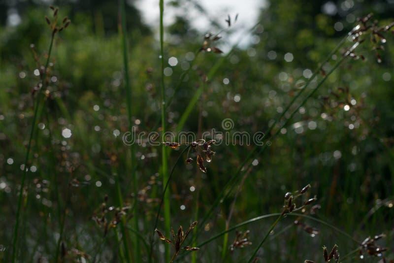 La beauté dans la nature photos stock
