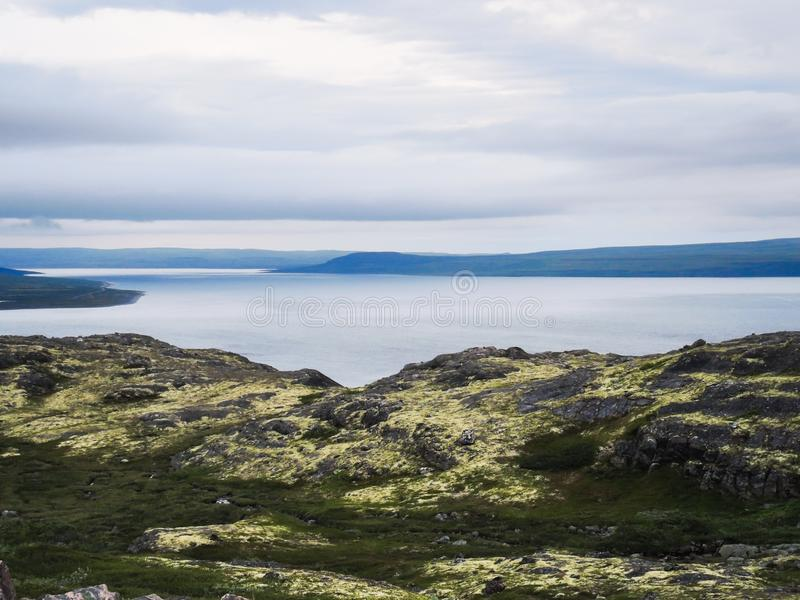 La beauté de l'été du nord dans la toundra images libres de droits