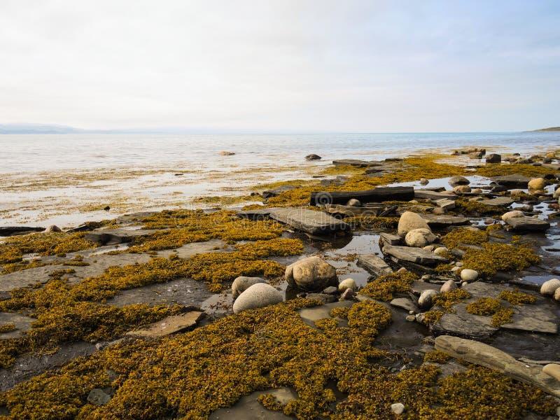 La beauté de l'été du nord dans la toundra photo libre de droits