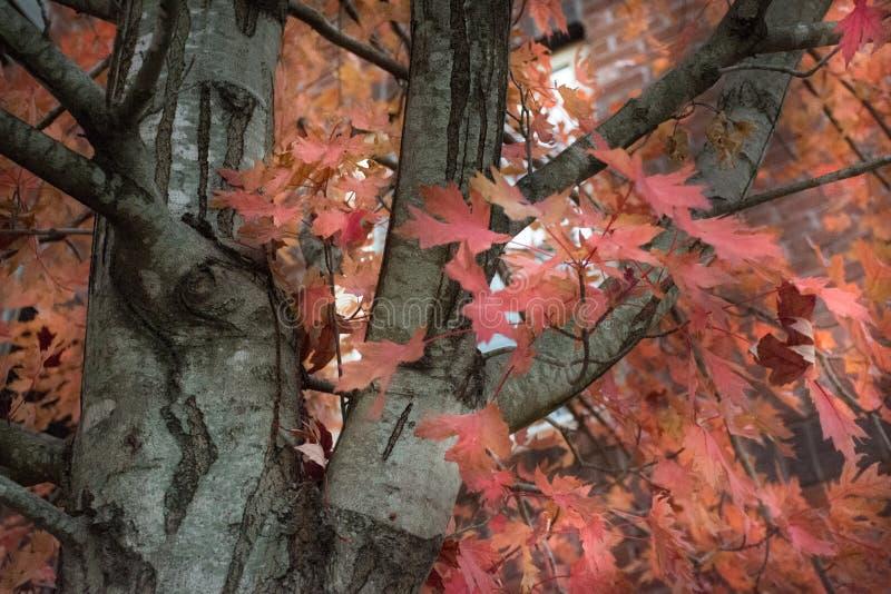La beauté de l'automne s'étend sur les belles couleurs de ses feuilles photo libre de droits