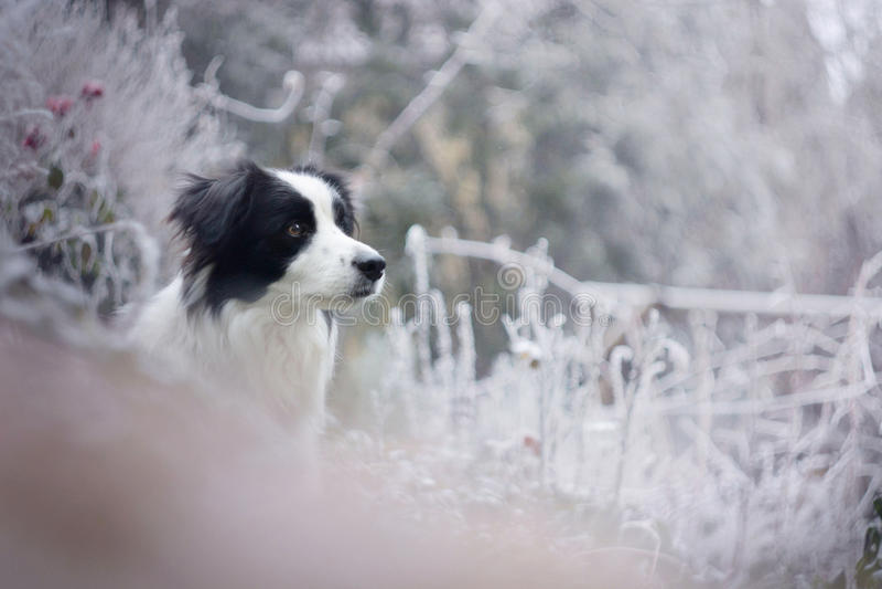 La beauté de l'hiver photos stock
