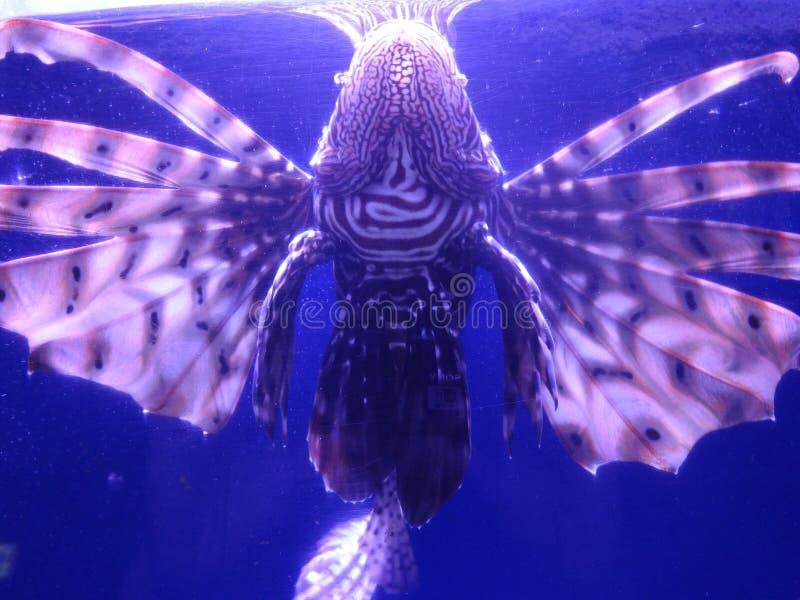La beauté de la nature de mer photo stock