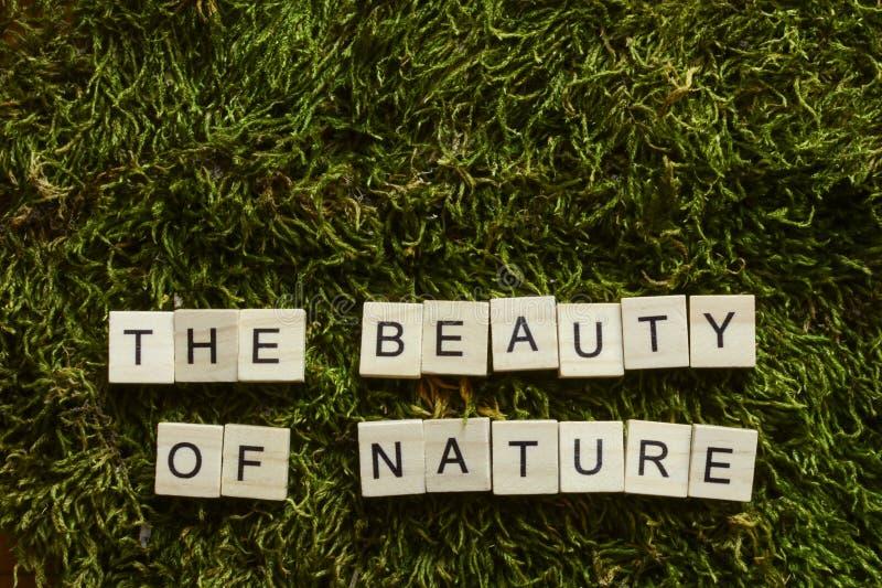 La beauté de la nature écrite avec les lettres en bois a cubé la forme sur l'herbe verte photo libre de droits