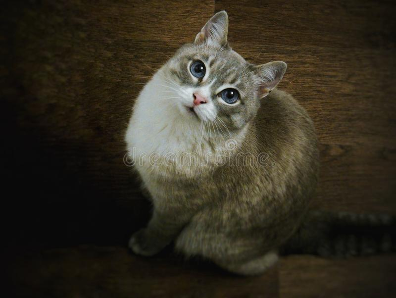La beauté des chats est imparable photo stock