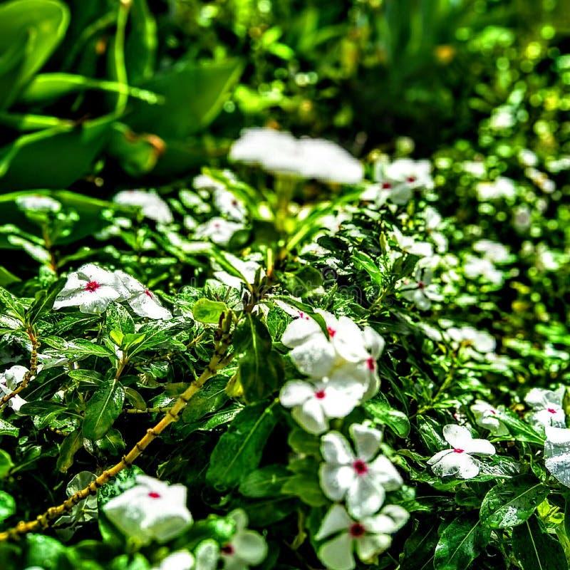 La beauté des fleurs photographie stock libre de droits