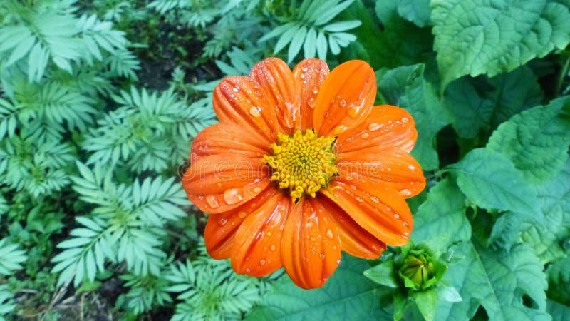 La beauté des fleurs après la pluie images stock