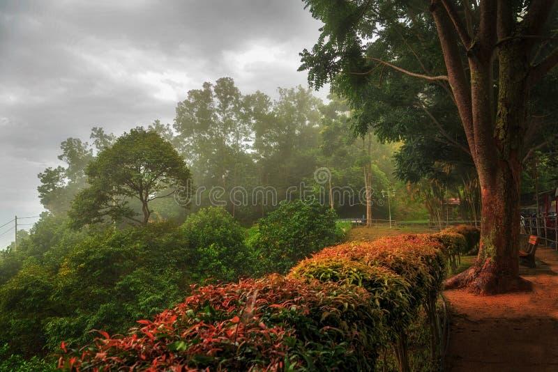 Download La beauté du brouillard photo stock. Image du beau, projectile - 45358236