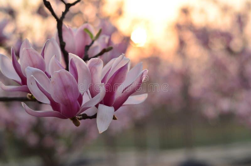 La beaut? du coucher du soleil images stock