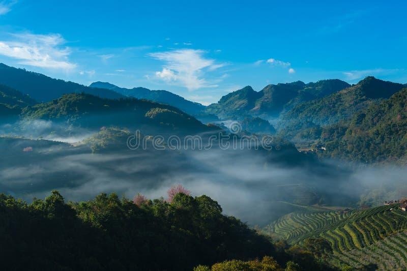 La bella alba e la foschia alla piantagione di tè sistemano a Doi Angkang, Chaingmai fotografia stock libera da diritti