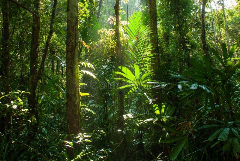La bella alba splende giù sulla foresta della palude della torba alla palude Forest Nature Research della torba di Sirindhorn ed  immagini stock libere da diritti