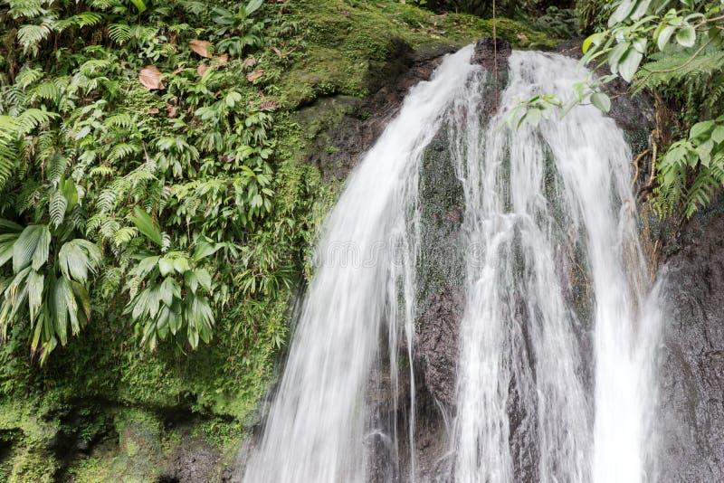 La bella cascata con il nome precipita a cascata i Ecrevisses aus. guadeloupe immagine stock libera da diritti
