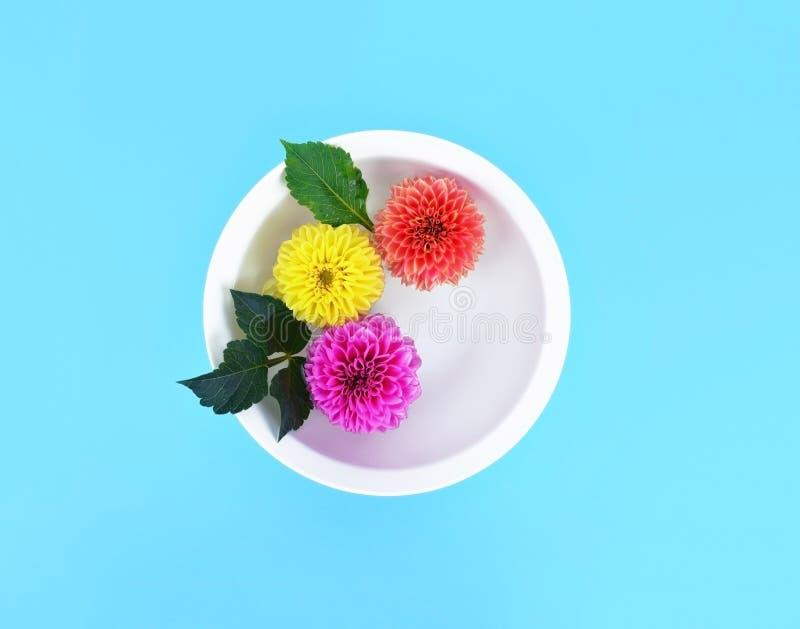 La bella dalia fiorisce in ciotola bianca con acqua sul fondo del turchese fotografia stock