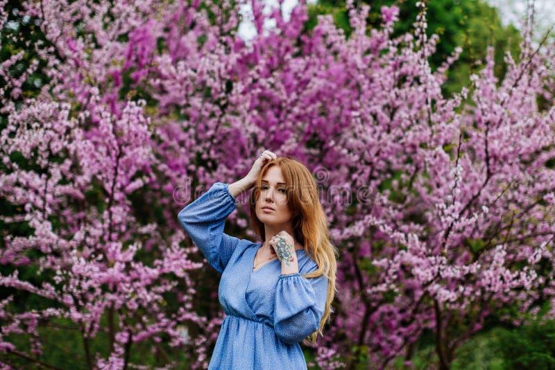 La bella donna di sogno della testarossa nei ciliegi del fiore di tempo di primavera fa il giardinaggio immagini stock libere da diritti