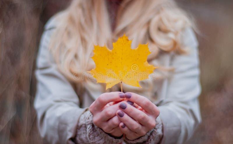 La bella donna sta tenendo la foglia gialla nelle parti anteriori di autunno fotografie stock