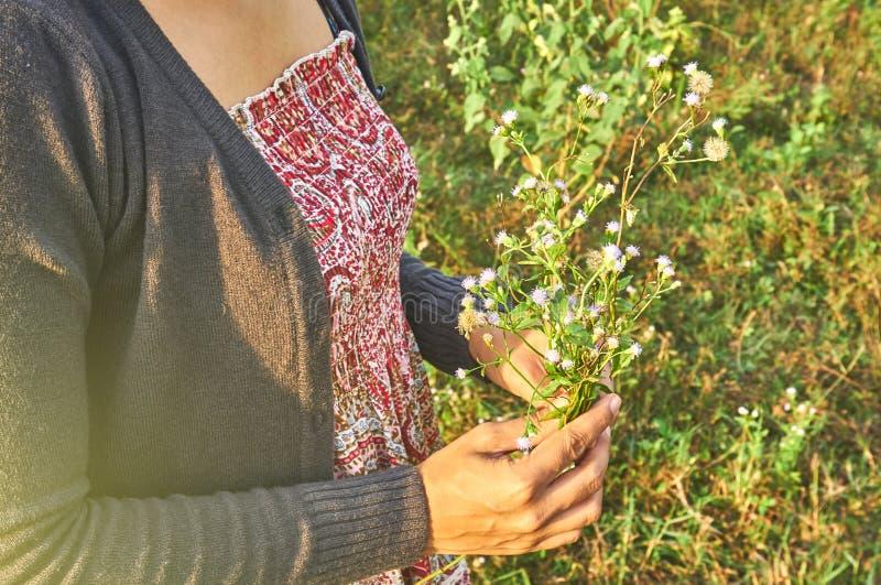 La bella donna sta tenendo i fiori minuscoli in sua mano fotografie stock libere da diritti