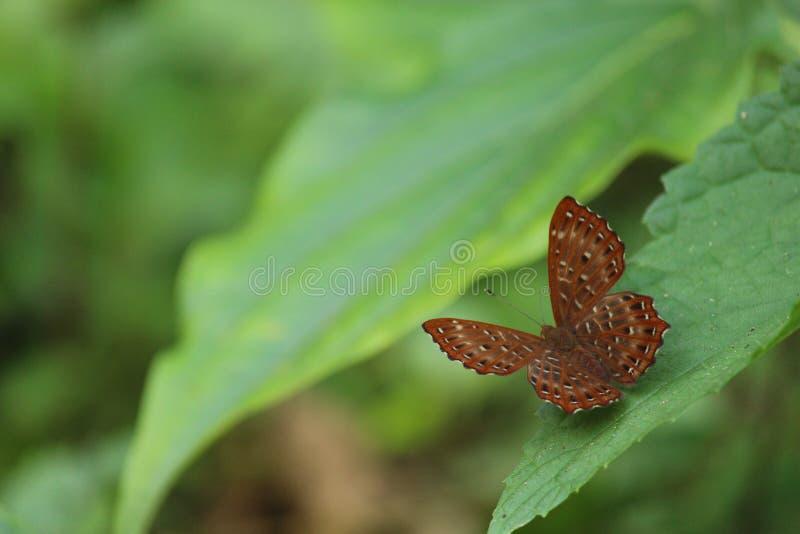 La bella farfalla fotografie stock