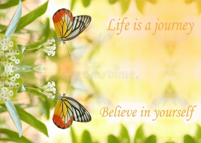 La bella farfalla gemellata assorbe un certo dolce dai fiori nel sunn fotografia stock libera da diritti