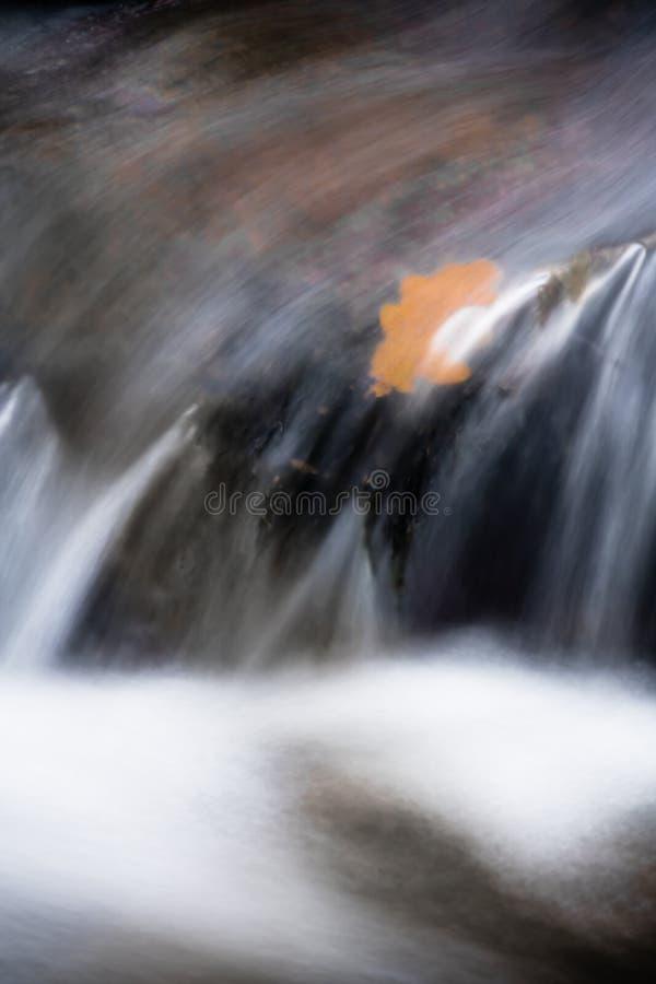 La bella fine di macro su sulle pietre del ruscello del fiume con la foglia arancio della quercia dell'acero si è sommersa in cas immagine stock libera da diritti