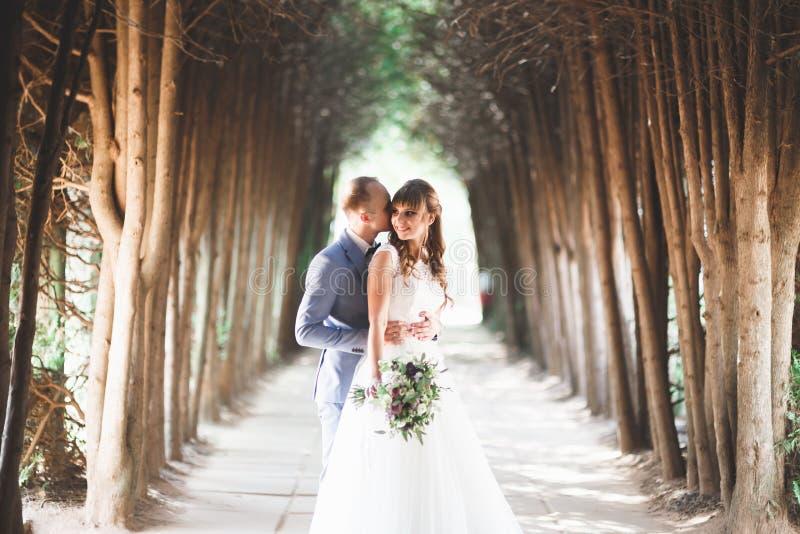 La bella giovane coppia di nozze è baciante e sorridente nel parco immagini stock libere da diritti