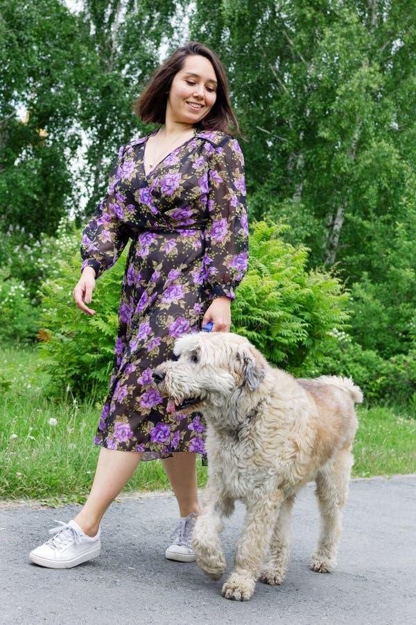 La bella giovane donna sta camminando con il suo pastore russo del sud Dog in un parco dell'estate con i cespugli lilla di fiorit immagine stock