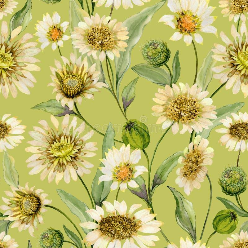 La bella margherita gialla fiorisce con le foglie verdi su fondo verde chiaro Modello senza cuciture della molla Pittura dell'acq royalty illustrazione gratis