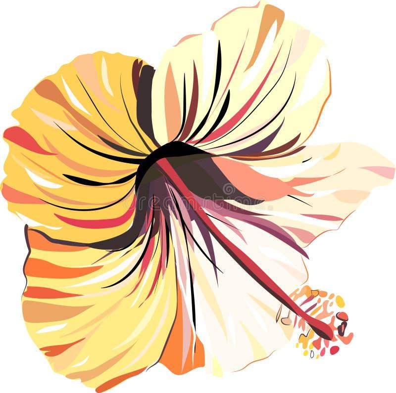 La bella offerta intelligente ha sofisticato l'ibisco rosa-chiaro dell'estate floreale tropicale adorabile dell'Hawai e giallo tr illustrazione vettoriale