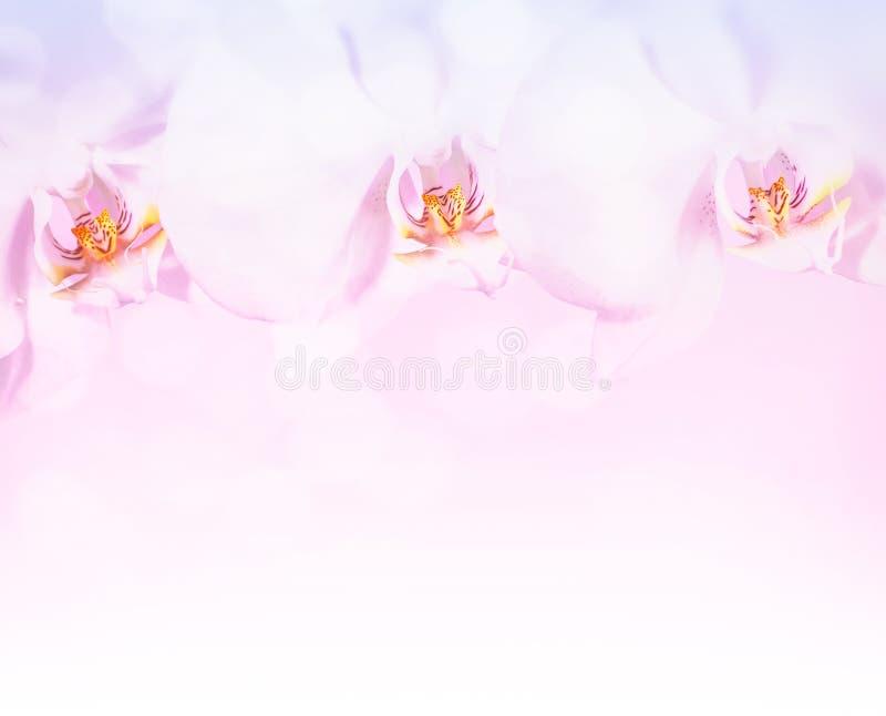 La bella orchidea fiorisce il confine fotografia stock