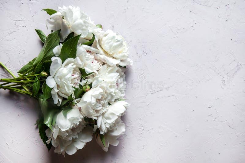 La bella peonia fiorisce con lo spazio della copia per il vostro stile di vista superiore e pianamente di disposizione del testo fotografia stock libera da diritti