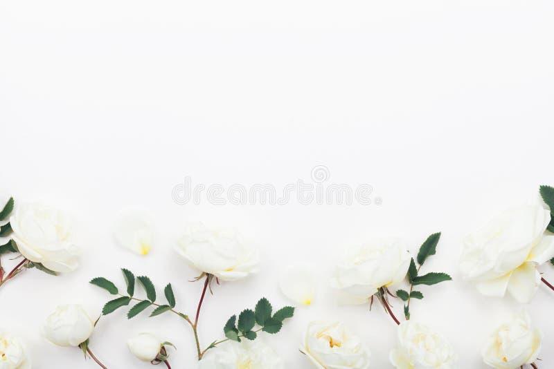 La bella rosa del pastello fiorisce e foglie sulla vista bianca del piano d'appoggio Bordo floreale dentellare stile piano di dis immagini stock libere da diritti