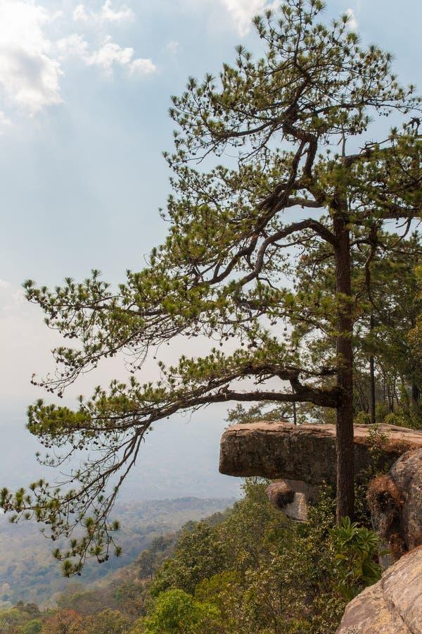 La bella scena della scogliera del lomsak è un punto di riferimento al parco nazionale del phukradung della Tailandia fotografie stock