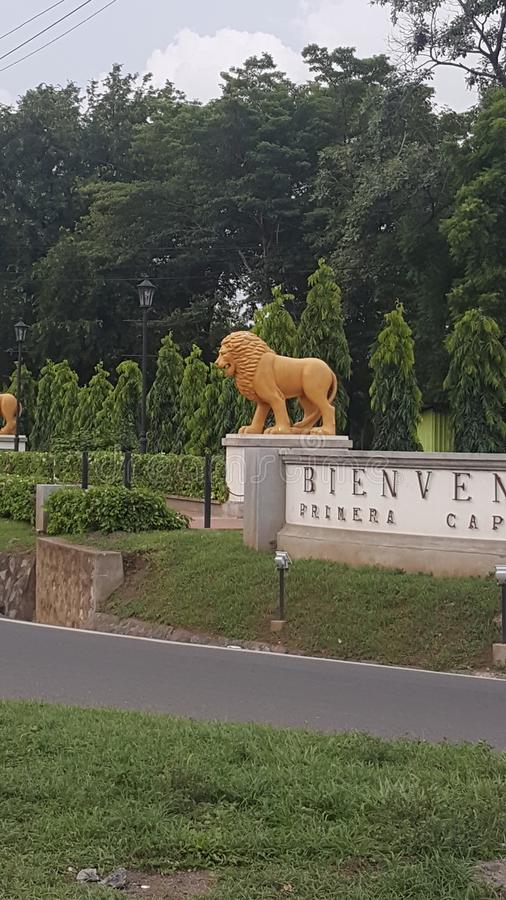 la bella statua del leone fotografia stock