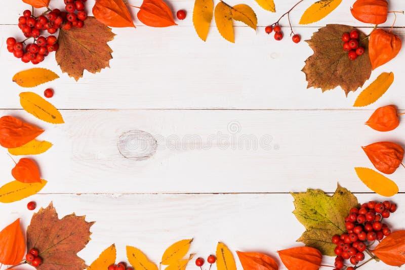La bella struttura luminosa di rosso arancio delle foglie di autunno e le bacche della sorba e del physalis su fondo di legno bia immagine stock