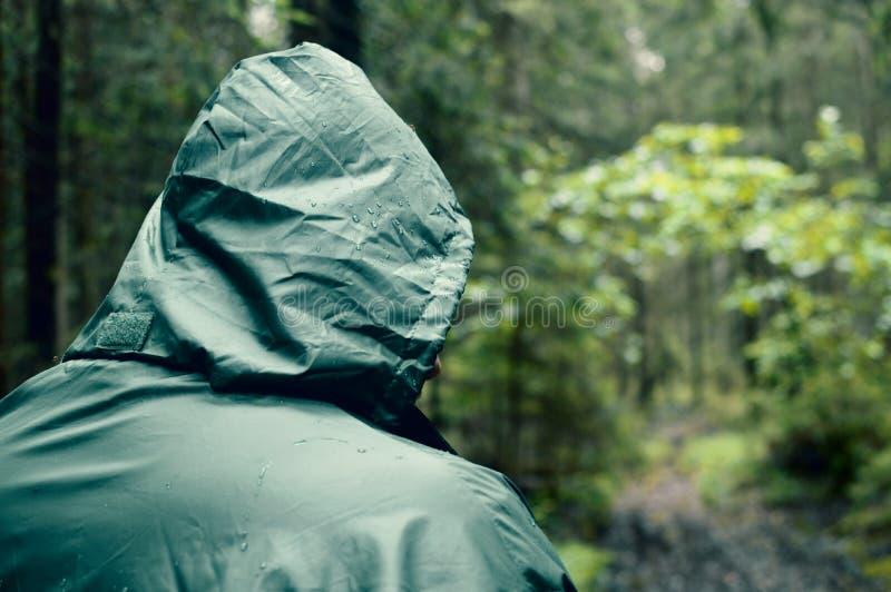 La bella vista della foresta pulita dell'estate ha riservato i posti selvaggi fotografie stock